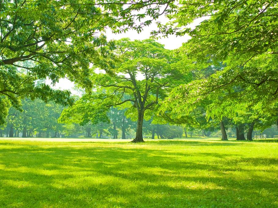 葉が生い茂る木々